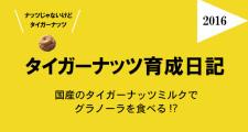 タイガーナッツ育成日記